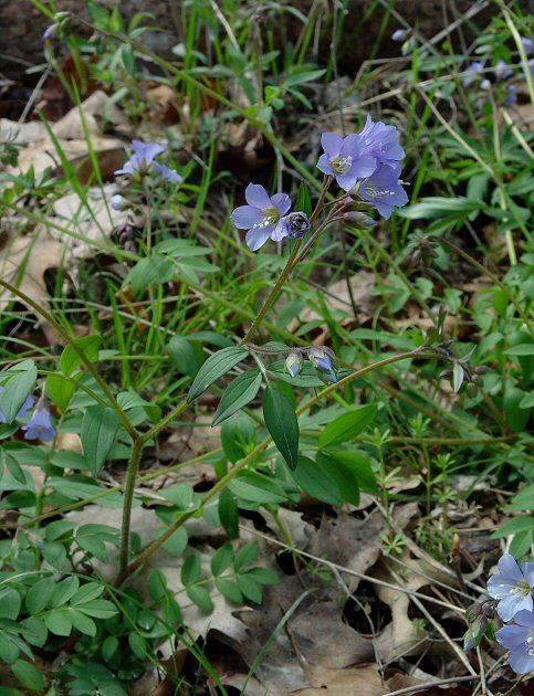 Abscess root in flower